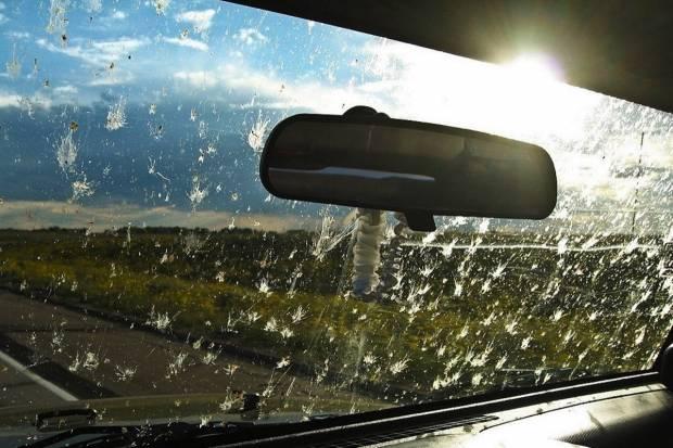 ¿Cómo afectan a tu coche los excrementos de pájaros?