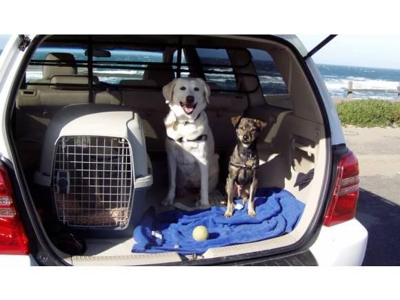 Red separadora para llevar animales en el coche: ¿obligatorio?