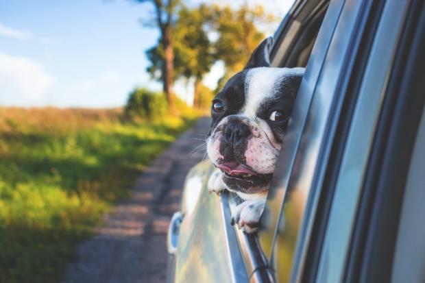 ¿Cómo debes viajar con una mascota en el coche?