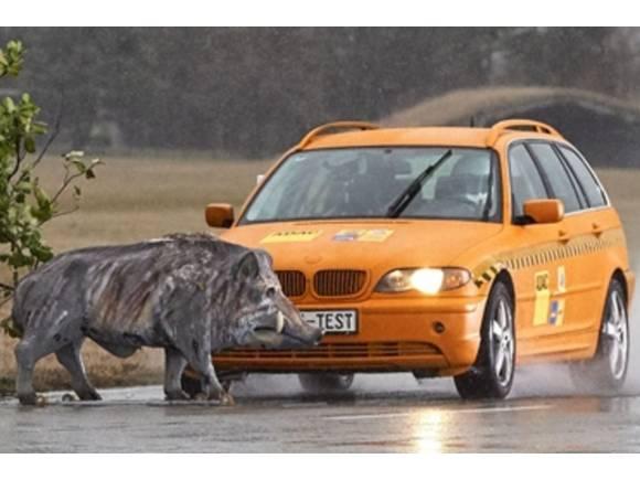 VÍDEO: Así es un accidente contra un animal a 80 km/h