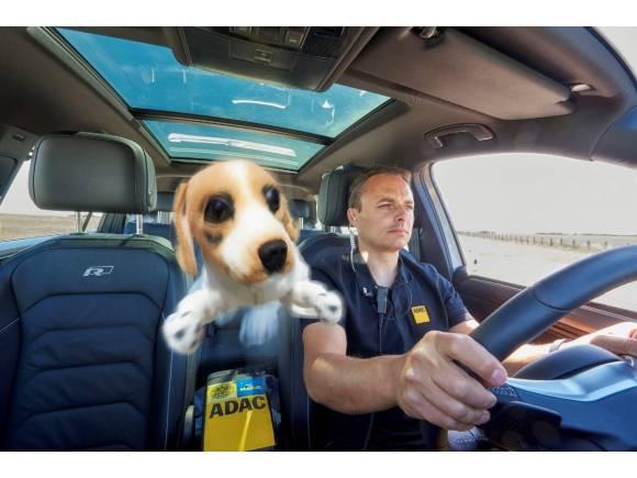 El peligro de llevar animales sueltos en el coche