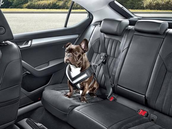 Preguntas frecuentes sobre cómo llevar a tu perro en el coche