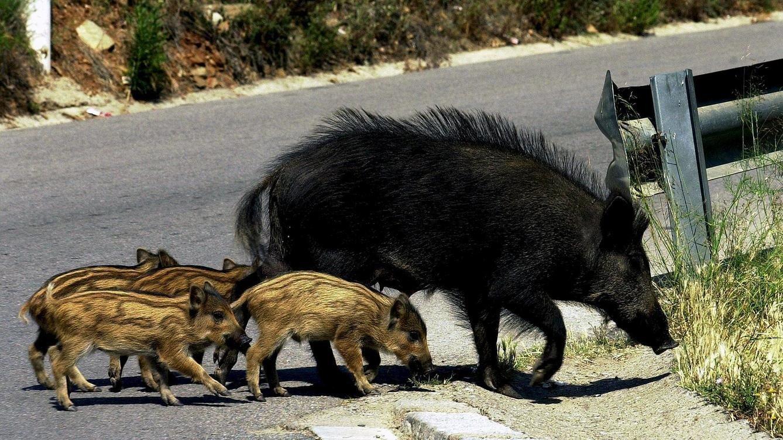 Accidentes con animales la responsabilidad del conductor - Imagenes de animales apareandose ...
