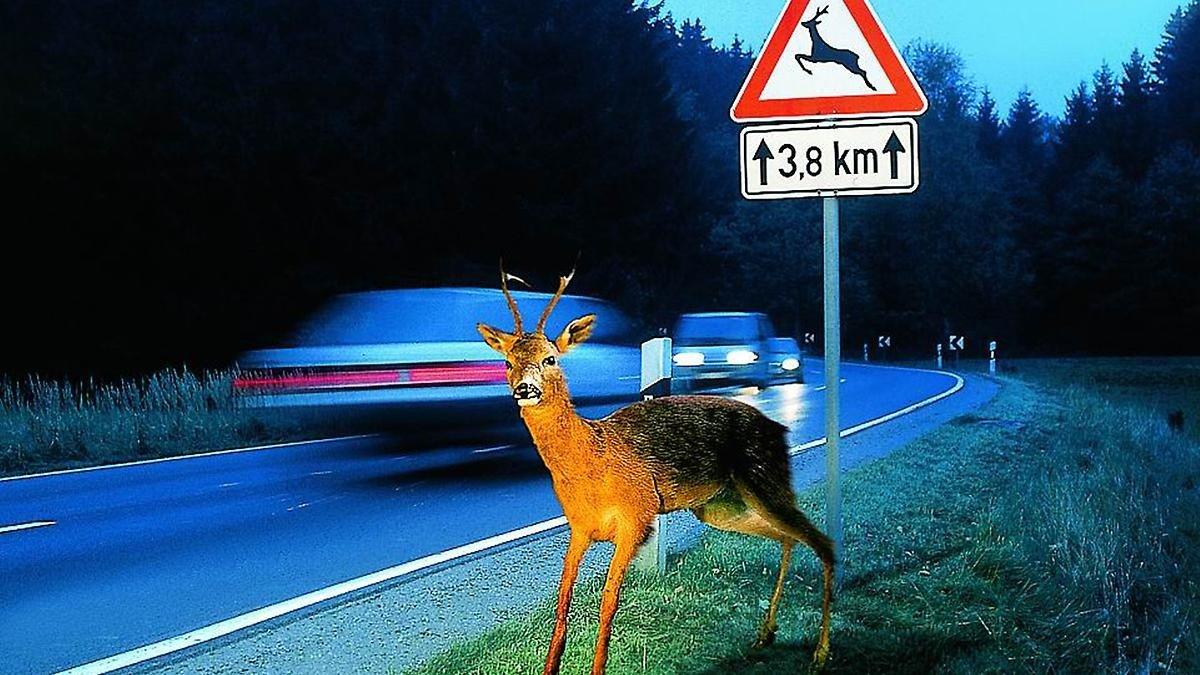 accidente animales
