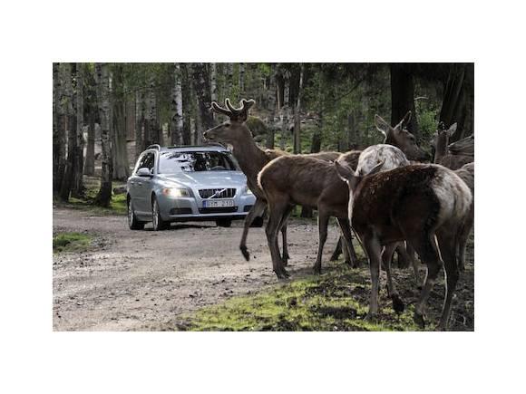 Accidentes con animales: la responsabilidad del conductor