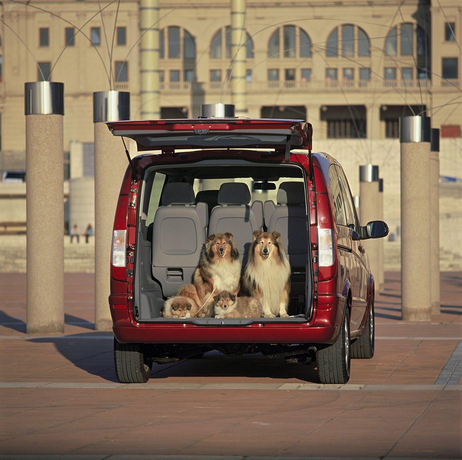 perros coche